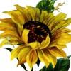 sunflowermom profile image
