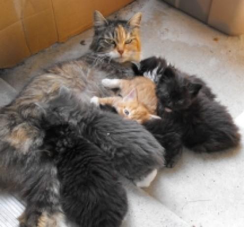 Princess' last litter, May, 2011. Princess spayed May 20, 2011. No more stray kittens needing homes!