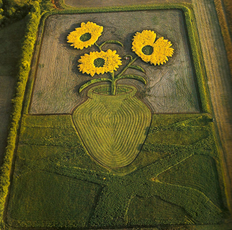 Van Gough inspired Sunflowers