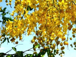 Beautiful flowers pictures - Beautiful Indian flowers and trees (Part 3)