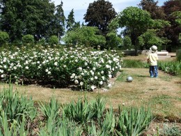 The attractive gardens at Eaton Park - note that the dry grass is due to the driest April for over 100 years.