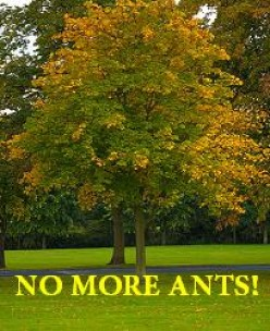 Ant Poison - How to Get Rid of Ants
