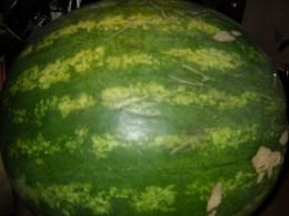 Seedless watermelon.