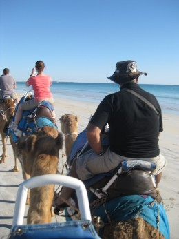 saw dolphins while on the camels