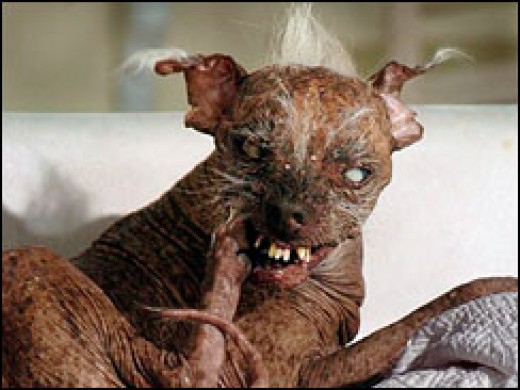 Ugliest animal in the world 2012
