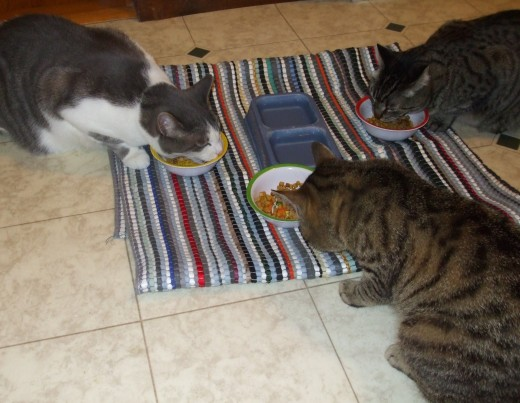 Our family of three cats eating in the kitchen.