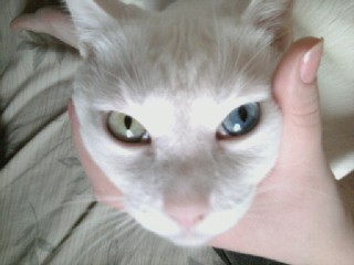 Look at Fredwards beautifully different eyes! One is greenish yellow, one is blue.