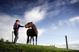 Giving your horse a treat
