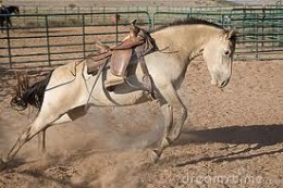 Some horses are 'crazy', you never know what they will do!