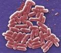 Big Pharma At It Again: Super Strain of E. Coli Unleashed