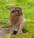 The Tale of the Hare With the Very Long Hairy Tail: Homonyms, Homophones, and Other Fun Word Play