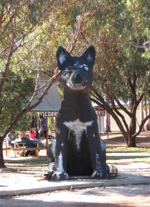 Big Aussie Dog