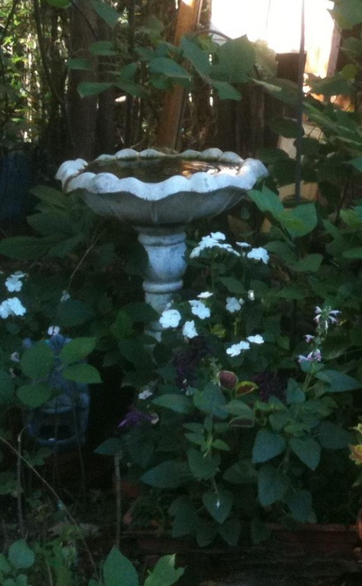 The drip fountain in the Memory Garden after the flowers filled out.