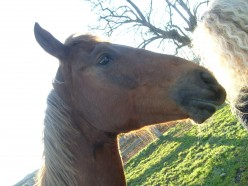 MY HORSE SPOKE TO ME - Psychic Communication with my Horse