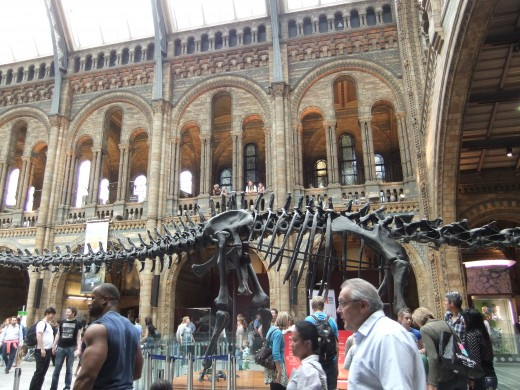 Inside the entrance of the Natural History Museum