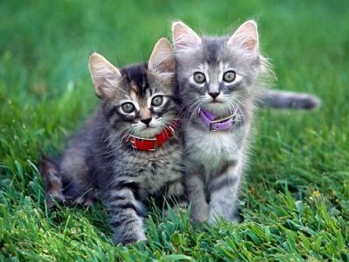Aren't we adorable?