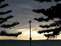 Norfolk pines and a mackeral sky at Port Lincoln