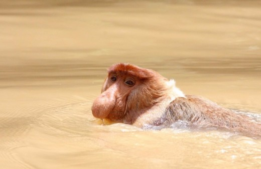 "Me doing the ""monkey paddle"""