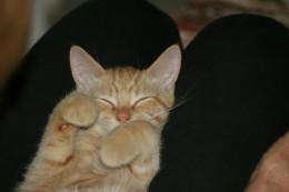 Sandy Cat