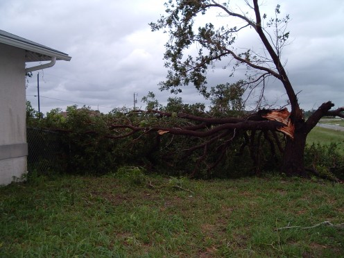 Smaller of the two trees. Most of the tree is laying on top of my fence by the house.