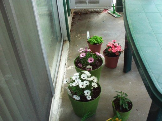 Flowers planted in a containers add beauty to what would otherwise be a boring apartment backyard.