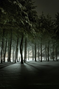 Is she really out there in the dark cold forest.