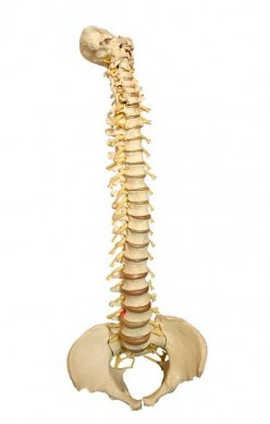 Osteopaths' Secrets to Treating and Preventing Back Pain