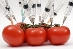GMO: The Deadly Truth About Genetically Modified Food