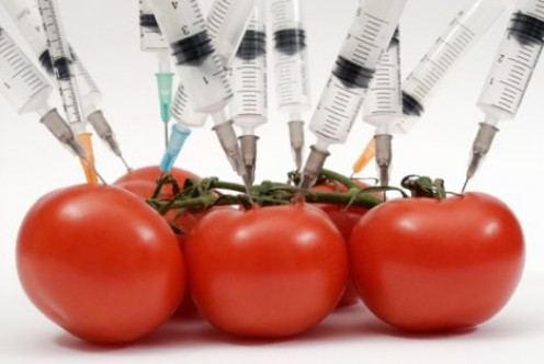 Genetically Modified Food is not required to be labeled. You may not want to eat genetically engineered foods. Chances are, you are eating them anyway.