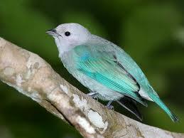 Sarah : The Little Gray Bird.