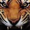 Tiger Mom profile image