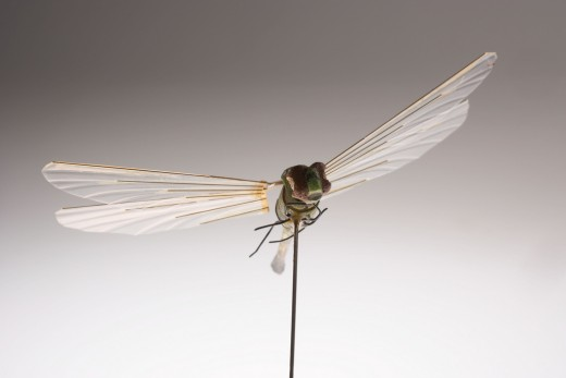 These dragonfly UAV's have been developed by the CIA...since the 1970's.  Past models have shown too little tolerance for wind gusts.