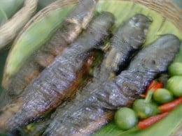 Grilled Mud fish
