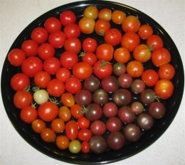 Cherry and Grape Tomatoes