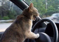 How make your cats Emigration journey as easy as possible