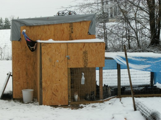 Our outdoor cat shelter during the big snow last Winter. Don't worry, it's heated!