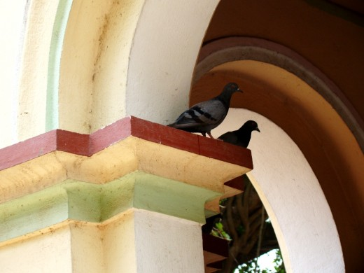 Two pigeons in the temple