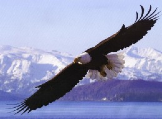 Soar with the eagles instead of walking with the turkeys. source Flickr