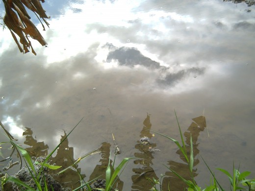 Cloud reflection on the rice field's water (Photo by Travel Man)