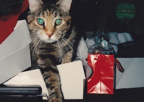 Katie (1980 - 1996)