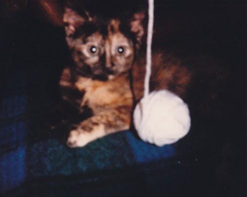Ninny (1987 - 2004)