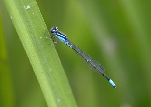 A smaller tripod can aid when you want to get closer to a low subject, such as an insect on a blade of grass.