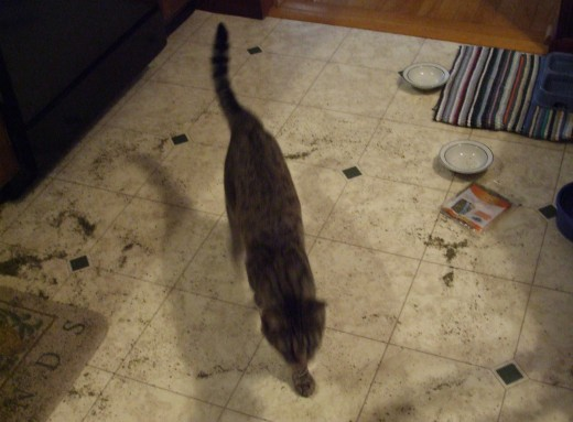As usual, our newest cat Skeeter is a blur in this photo, as he races through the kitchen.