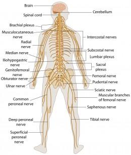 OSLER Practice Case (Neurology)