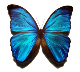 This butterfly has reflection symmetry.