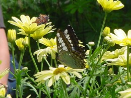 Brightly colored flowers will often attract butterflies to your garden.  This will really excite your children.