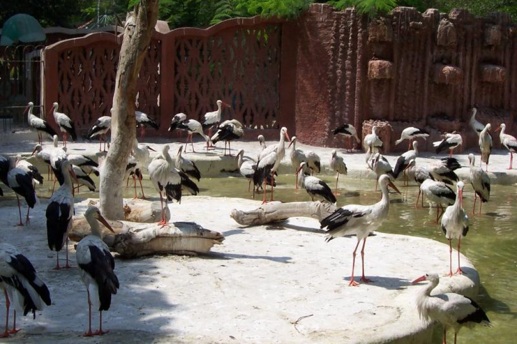 the purpose of the zoo 2:26:09 pm essay topic: if the the zoo has no useful purpose zoo serves as an attraction to peoplemost of us enjoy watching different kinds of animals in the zoowe are so amazed in looking and observing themhowever we should consider if the zoo is beneficial ti people or harmful to animals keepin the animals in the zoo has its benefits to people most of us like viewing animals because it.