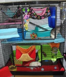 Critterchic's Martin's R-695 cage decorated and ready for her rats!