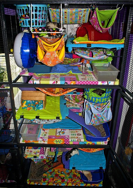 Click to see more Critter Nation cages!