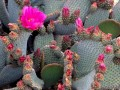 The Top 10 Cacti For Your Desert Garden